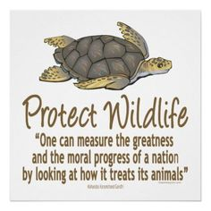 Protect Sea Turtles Poster - Custom Posters - Design Your Own Wall. Racing Extinction, Animal Species, Endangered Species, Conservative Quotes, Wildlife Biologist, Save Wildlife, Turtle Love, Animal Protection, Wildlife Conservation