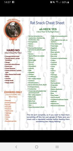 I made a cheat sheet of good and bad foods from all the ratty websites, hope thi. - I made a cheat sheet of good and bad foods from all the ratty websites, hope thi… I made a chea - Most Endangered Animals, Rare Animals, Strange Animals, Endangered Species, Homemade Rat Food, Rat Facts, Pet Rat Cages, Rat Cage Accessories, Rat Care