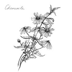 black and white botanical art - Google leit
