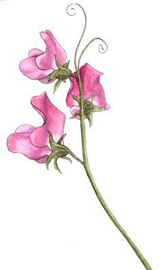 Image result for watercolor sweet pea tattoo