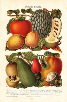 1894 Antique TROPICAL FRUIT print