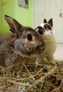 two super cute rabbits