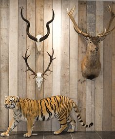 Taxidermy, Clock, Wall, Animals, Home Decor, Watch, Animales, Decoration Home, Animaux