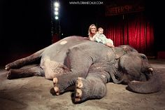 Floriane Caux Photographe {Paradise Circus} Séance photo Maman - Bébé dans un Cirque - Toulouse 31 #baby #elephant #cirque #circus