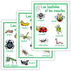 Affiches, les bestioles et les insectes Grade 2 Science, Life Science, French Teacher, Teaching French, Amelie Pepin, French Colors, French Education, Teachers Corner, French Resources