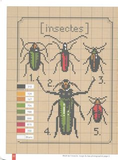 Gallery.ru / Photo # 21 - Herbiers et autres collections Scan my - Mosca free simpler insect collection diagram pattern