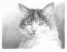 calico_cat_pencil_portrait.jpg (700×544)