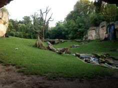 Hannover Zoo - Gorilla exhibit