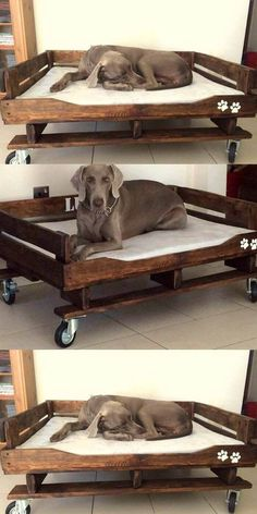 A DIY dog bed pallet made can be a cheap and easy way to give your pet some comfort, so pay attention to the ideas we are about to present to you and get ready to buy some pallets and make a custom dog bed. Pallet Dog Beds, Diy Pallet Bed, Diy Dog Bed, Diy Bed, Raised Dog Beds, Custom Dog Beds, Outdoor Dog Bed, Designer Dog Beds, Dog Potty