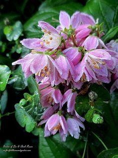Gardening/curb appeal :: Terri J's clipboard on Hometalk :: Hometalk