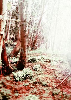 """""""Blood Wood"""" Photography by Sybille Sterk posters, art prints, canvas prints, greeting cards or gallery prints. Find more Photography art prints and posters in the ARTFLAKES shop. Woods Photography, Canvas Prints, Art Prints, Blood, Trees, Posters, Gallery, Outdoor, Art Impressions"""