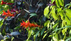 Grow a vertical garden in your home