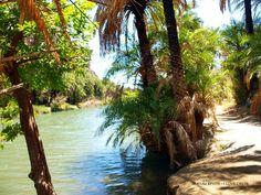 Crete island-Greece The forest of Preveli!