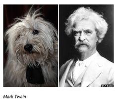 #dogs #dogsdagramm #followforfollow #likeforlike #nice #pic #stunning #cool #yes #a #black #art #artwork #painting #photo #photography #amazing  #doggy #dog #marktwain #funny #lol #photoart http://tipsrazzi.com/ipost/1518253476462993418/?code=BUR634nlCAK