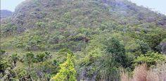 Governo anuncia programa de monitoramento do Cerrado