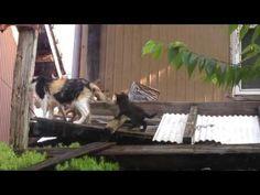 ワタナベの健康通信: かわいい子猫11
