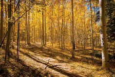Gilded Trails | 5280. Perimeter Trail, Ouray. Great fall hike followed by hot springs visit