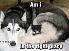 Cuteness level: Camouflage - Click Here to view in larger Resolutions  http://funyfotos.com/funny-photos/cuteness-level-camouflage-3/