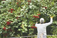 Manutenzione giardino dell'apiario sperimentale di Marentino www.coopagridea.org