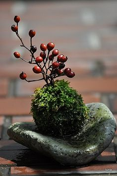 南天 simple arrangement of moss, berries, and stone