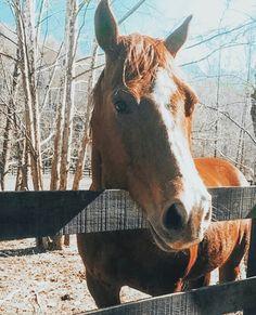 Cute Horses, Pretty Horses, Horse Love, Beautiful Horses, Funny Animal Memes, Cute Funny Animals, Cute Baby Animals, Big Animals, Farm Animals