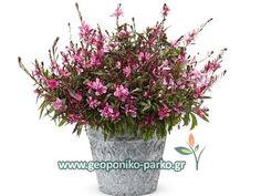 Crochet Flowers, Plants, Red, Gardening, Weddings, Decoration, Decor, Crocheted Flowers, Lawn And Garden