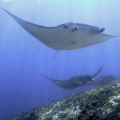 flores indonesia dive.  this will be so amazing.  hope I don't drown when my regulator falls out of my mouth when I open it in amazement