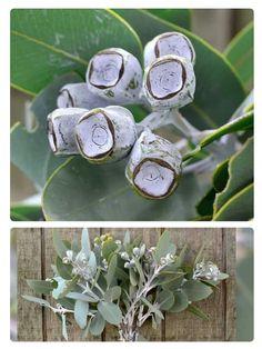 Tetragona nuts - silvery seepdpods of Eucalyptus tetragona. so pretty for vintage and winter weddings Wedding Colors, Wedding Flowers, African Plants, Australian Plants, American Wedding, Seasonal Flowers, Silver Flowers, Outdoor Entertaining, Flower Wall