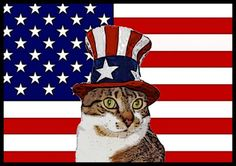 4th of July PURRade!  Check out some of these patriotic kitties.