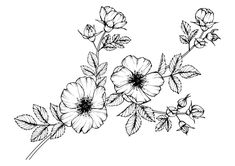 Dibujo para colorear unas flores silvestres Flower Bouquet Drawing, Flower Tattoo Drawings, Yellow Rose Tattoos, Rose Flower Tattoos, Hd Flowers, Girls With Flowers, Flower Plant Images, Lemon Drawing, Wildflower Drawing