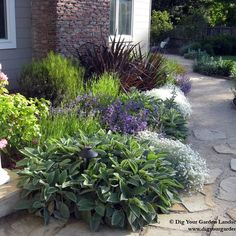 Plant Combinations - Northern California Gardens