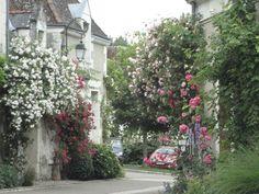 CHEDIGNY dans le Sud de l'Indre et Loire