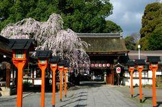 Hirano Shrine 平野神社 神門と魁桜 Kyoto pref