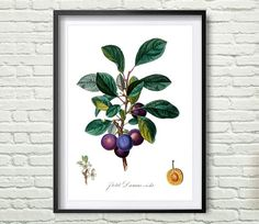 3 Colors Background Antique botanical print от Artvintagedecor