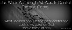 """Just When We Thought We Were In Control, The Ants Came (What I Learned About Letting Go of Control and Casting My Cares on God from a Horde of Ants) Featuring """"Cast My Cares"""" by Finding Favour via @JeanWilund.com"""