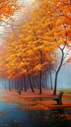 Autumn in Orange colorful nature trees autumn leaves fall orange autumn pics fall pics Beautiful World, Beautiful Places, Beautiful Park, Foto Nature, Belle Photo, Pretty Pictures, Beautiful Landscapes, Autumn Leaves, Autumn Trees