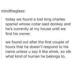 The doggo named Donkey