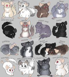 Chinchilla colors in cartoon! Cage Chinchilla, Chinchilla Facts, Baby Animals, Funny Animals, Cute Animals, Chinchillas, Hamsters, Rodents, Alfabeto Animal