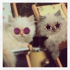 Hipster Cats' #EastSideMojo