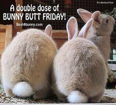 #BunnyButtFriday #rabbit #bunny #bunnies #cute #furry #furbaby