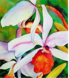 ....Orquídeas...