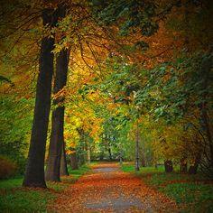 ✮ Autumn Colours