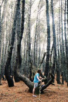 Beach Forest - Photo by Liam J Wright