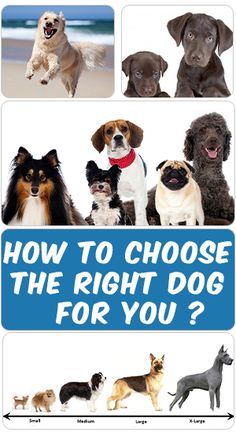 Before adopting a dog, you need to consider many factors. Most importantly check your current lifestyle to know what adjustments and changes you are willing to make for a dog. Find out more information by clicking on this PIN ....