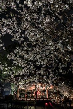 2014-04-09平野神社