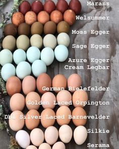 Chicken Coop Ideas 411938697167277991 - 🌿The Lineup🌿 . Want to know who of our lineup lays what? Here is a fun color egg chart labeled with the breeds. Represented here are all of… Source by Cicilibrili Chicken Garden, Backyard Chicken Coops, Diy Chicken Coop, Backyard Farming, Chickens Backyard, Chicken Coop Pallets, Inside Chicken Coop, Small Chicken Coops, Chicken Feeders