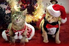 Funny animals at Christmas