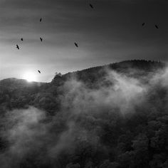 Bird pic by Souichi Furusho Pretty Pictures, Monochrome, Rainbow, Spaces, Bird, Photography, Outdoor, Black, Cute Pics
