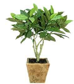 Slappendel Greenhouse, Plant Distributor, Grower, Tropical, Foliage, House plants, Ferns, Peace lily, Hanging baskets, Bedding plants, Spring Plants, dishgarden, poinsettia, fundraisers
