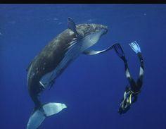 Yüzme zayıflatıyorsa balinalar ve BEN nerede yanlış yapıyoruz acaba? :)